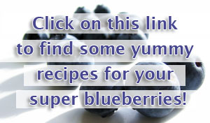 Blueberry Consulting Recipes